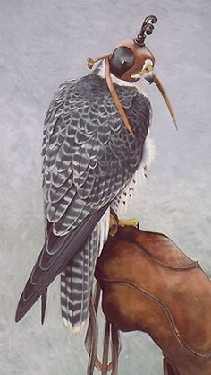 A hooded saker falcon, ready for the hunt. Raptor Bird Of Prey, Birds Of Prey, Animals And Pets, Cute Animals, Pigeon Breeds, Peregrine Falcon, Wild Birds, Bird Art, Bird Feathers