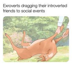 Crazy Funny Memes, Really Funny Memes, Stupid Memes, Funny Relatable Memes, Haha Funny, Funny Cute, Funny Jokes, Hilarious, Memes Humor