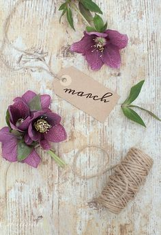March by aboutgarden Hello January, Happy March, Happy Spring, Spring Break, Days And Months, Months In A Year, 12 Months, Birthday Month, Birthday Wishes