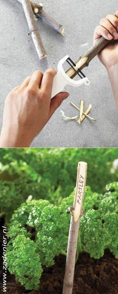 Um, yes! So doing this in my new herb garden!!!!!!