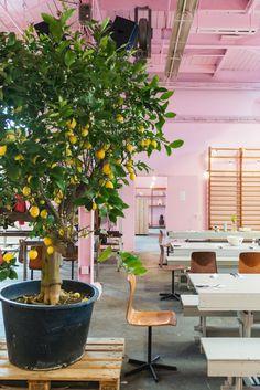 informatie • Restaurant van Aken in het Werkwarenhuis Coffee Places, Interior, Den, Plants, Restaurants, Shops, Spaces, Food, Patio