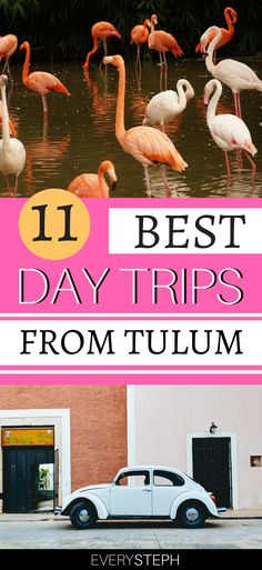 Tulum, Mexico, is amazing, but the rest of the Riviera Maya is beautiful too. Climbing pyramids in Coba, swimming with turtles in Akumal and visiting Las Coloradas pink lakes are just some of the best day trips from Tulum. Read on to discover 11 unmissable excursions from Tulum! | things to do in Riviera Maya Mexico | things to do in Tulum Mexico | things to do in Tulum Mayan ruins | Cozumel day trip | Chichen Itza day trip #tulum #rivieramaya - via @everysteph