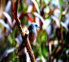 Bird of Colours