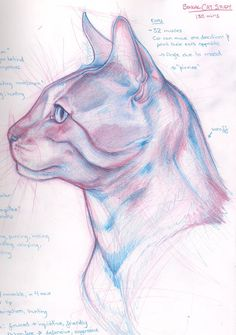 Cat Study 02 by Raven-Scribbles on deviantART