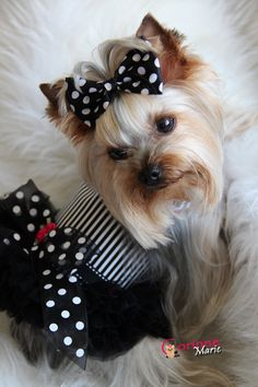Black and White ROCKS my world!   https://www.facebook.com/OwnedByYorkies