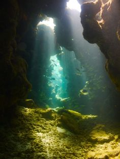 I dont know where this is, but if I ever find it diving I don't know if I would ever leave.