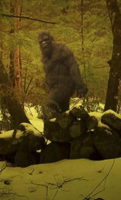 Bigfoot - the best depiction I've seen yet!