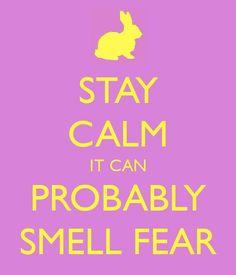 tangled. keep calm craze