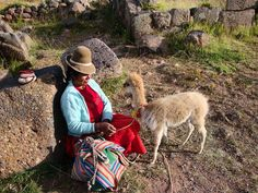 Nas montanhas de Sillustani um bebê vicunha e sua dona. Puno Peru. Viagens para recordar. Um lugar pra voltar. #vicunha #sillustani #puno #preinka #mercosul #americadosul #peru #viagem #turismo #férias #fotododia #minhavida #vlog #mylife #youtubechannel #trip #photooftheday #fun #travelling #tourism #tourist #travel #myworld