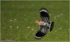 Animals Beautiful, Wildlife, Birds, Community, Photos, Cutest Animals, Bird