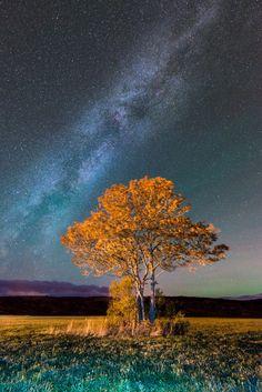 Photograph Aurora Borealis Milky Way Orange Tree by John David on 500px