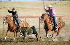 steer tying and rodeo.  slide show