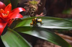 Colourful frog Reptiles And Amphibians, Animals, Color, Animais, Animales, Animaux, Colour, Animal, Colors