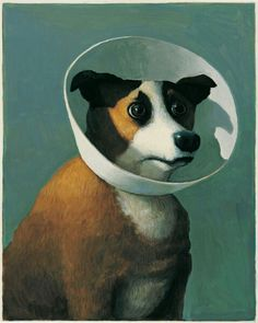 Kranker Hund - dog with lampshade