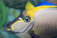 COLORFUL by raphealster #nature #photooftheday #amazing #picoftheday #sea #underwater