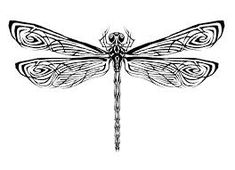 「dragon fly」的圖片搜尋結果