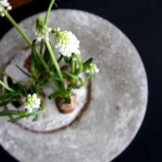 Blumentopf aus Beton pflanzen