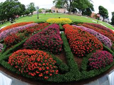 Knot garden, very pretty Beautiful Landscapes, Beautiful Gardens, Beautiful Flowers, Garden Landscaping, Landscaping Ideas, Garden Inspiration, Garden Ideas, Topiary, Flower Beds