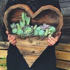 Succulent basket...love this