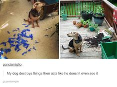100 Tumblr Posts About Puppies And Kittens That'll Make Your Day Instantly Better