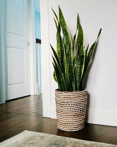 indoor decorative plants to bring freshness; home decoration with indoor plants zone Source by Decor plants Bedroom Plants, Bedroom Decor, Plants In Living Room, Living Rooms, Decor Room, Plant Zones, Decoration Plante, House Plants Decor, Snake Plant