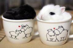 Cup of tea bunnies...