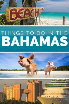 Things to do in Bahamas; Our expert Bahamas Travel Guide with 15 unmissable things to do in Bahamas. From the Bahamas Islands to activities we have everything you need to know to make the perfect Bahamas Vacation or Bahamas honeymoon. Visit the Bahamas Pigs at Pig Island Staniel cay, or swim with Bahamas Sharks at Compass Cay. Take a Bahamas Cruise and disembark in Nassau Bahamas and explore Paradise Island Bahamas and the Atlantis Bahamas resort. With all the top Bahamas Beaches, Bahamas…