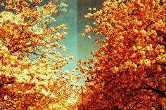 35mm film. Pretty Color INspiration