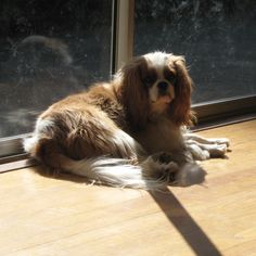 Sunning himself by the window