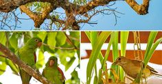 Sabiá-barranco é fotografado em orquídea: belezas que se completam
