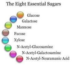 * essential sugars our body need. We can only derive 2 from our modern day diets. Wellness Fitness, Wellness Tips, Wellness Products, Health And Wellbeing, Health And Nutrition, I Am A Warrior, Wellness Industry, Gorgeous Body, Paper Organization