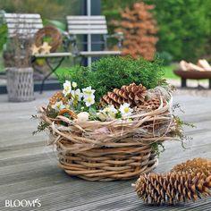 Mit Winterpflanzen den Balkon gestalten Pine Cone Decorations, Outdoor Christmas Decorations, Garden Decorations, Beautiful Flowers Garden, Beautiful Gardens, Winter Balkon, Porch Garden, Christmas Arrangements, Perfect Plants