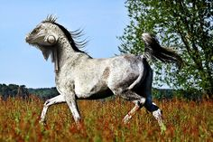 Horse lizard! Great advanced photo manipulation in Photoshop.