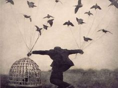 Robert and Shana Parke-Harrison - Flying lessons Quotes To Live By, Me Quotes, Motivational Quotes, Inspirational Quotes, Bird Quotes, Famous Quotes, Cover Quotes, Quotable Quotes, Daily Quotes