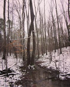 """Sam Calhoun on Instagram: """"A rare snow day yesterday in Bankhead National Forest, AL.  #snow #visitnorthal #explore #getoutstayout  #optoutside #getoutide #travel…"""""""