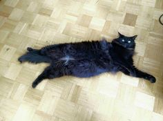 13 Cat Bellies That Are Total HAND TRAPS
