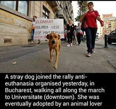 This is what I will call a LOVESTORY!!!! The dog joined the demonstration...and got a home!!!! Bless the one who took him/her into their home STOP KILLING THE DOGS IN ROMANIA!!!!!! Pet Organization, Volunteer Work, Going Insane, Stray Dog, How To Raise Money, True Beauty, Rescue Dogs, Romania, Gypsy