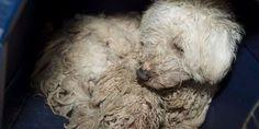 Demand jail for animal killers like April Iriving who has ab... - Care2 News Network
