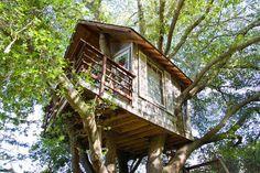 Ganhe uma noite no Treehouse above San Francisco Bay! em Burlingame no Airbnb!