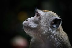 9 Monkeys That Chewed Off Their Fingers: A Sordid tale of Neuroplasticity