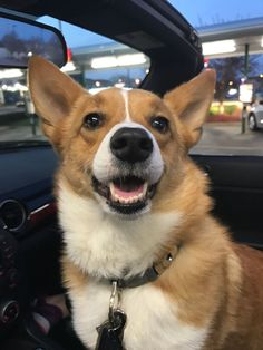 The traits I enjoy about the Fun Pembroke Welsh Corgi corgi memes Cute Corgi Puppy, Corgi Funny, I Love Dogs, Cute Dogs, Birthday Corgi, Fluffy Corgi, Corgi Facts, Pembroke Welsh Corgi Puppies
