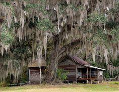 Florida Native Photography