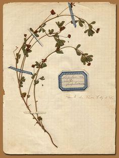 Pressed Flower archive- Anahata Katkin Blog