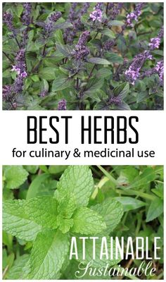 Easy herbs to grow in your garden for medicinal and culinary use.
