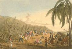 De familie Camijn en Suriname.