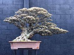 Bonsai Art, Lion Sculpture, Statue, Landscape, Art Floral, Photography, Japan, Scenery, Photograph