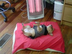 """""""Oooooooooh, this is so warm......I'm just gonna rest for a minute, . The Life of a French Bulldog."""