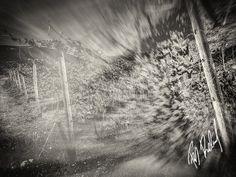 Weingarten  5 Pieces Limited Edition130cm X 100cm  #weingarten #vineyard #Badfischau #austria #österreich #niederoesterreich #fineart #wandbild #analoglook #natur #nature #landwirtschaft #sw #blackandwhite #editition #decor #homedecor #limitededition #Livingroom Illustration, Abstract, Artwork, Photos, Landscape Pictures, Still Life, Agriculture, Photo Art, Photographers