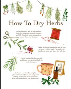 green witchcraft madisonsaferillustration: A how to for drying herbs. There are tons of methods, as everything in herbalism. This one works well for me! Magic Herbs, Herbal Magic, Green Witchcraft, Witchcraft Herbs, Magick Book, Magick Spells, Candle Spells, Witch Herbs, Witchcraft For Beginners