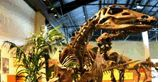 Rocky Mountain Dinosaur Resource Center in Woodland Park, Colorado. Small museum but must see in the Colorado Springs area!